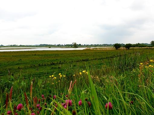Als journalist en tekstschrijver voor natuur en landschap schreef ik een stuk over 10 nieuwe belevingsplekken langs de IJssel, waaronder de Vreugderijkerwaard.